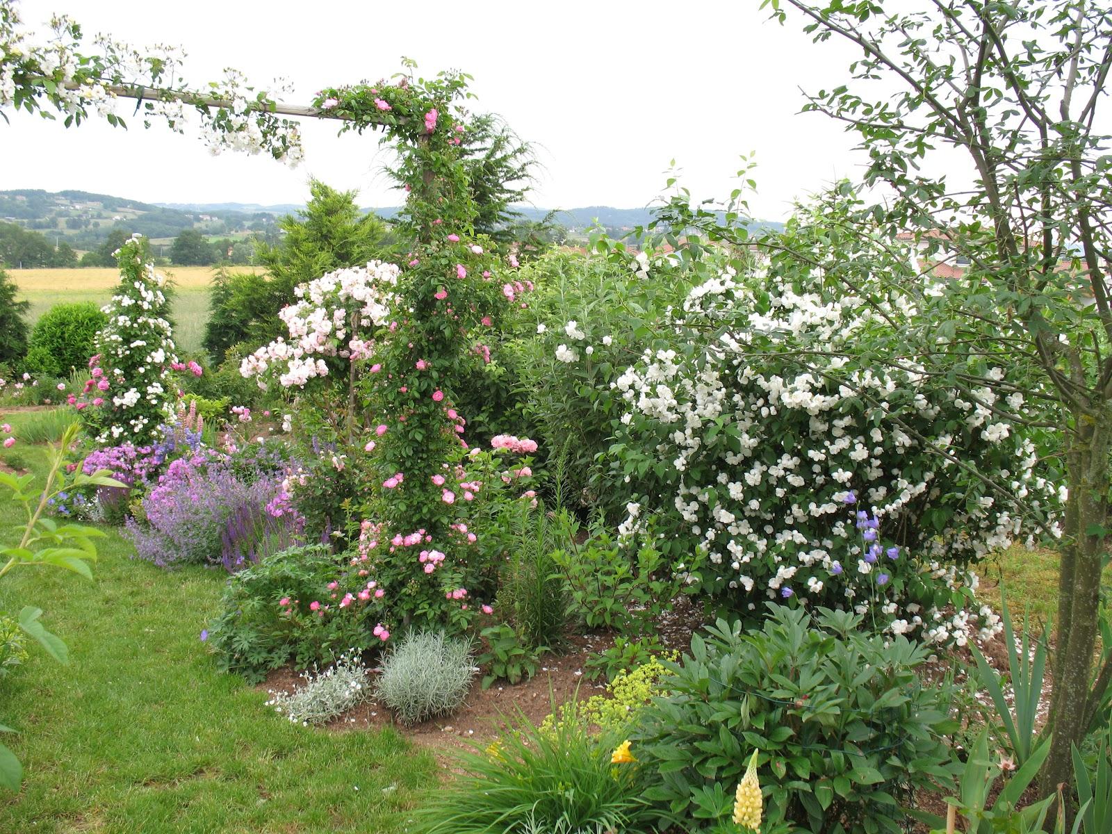 Roses du jardin ch neland seringat coronarius for Culture des jardins