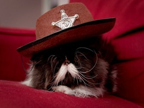 Cat sheriff