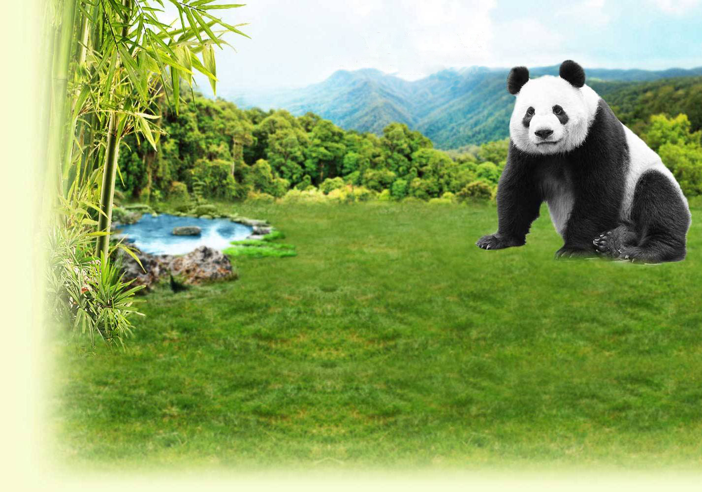 Panda TV - Follow the adventures of Kai Kai and Jia Jia in these behind-the-scenes videos!