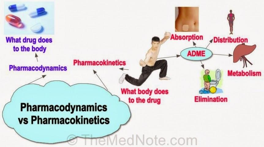 Pharmacokinetics and pharmacodynamics of ciprofloxacin dosage