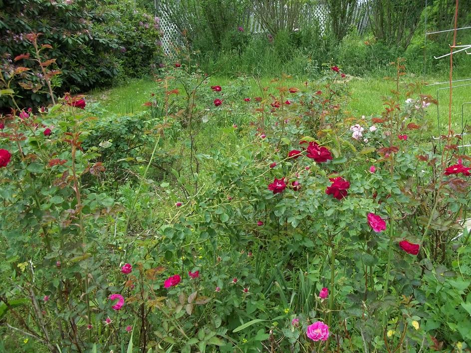 Glory 39 S Garden I Never Promised You A Rose Garden