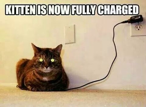 kitten is fully charged