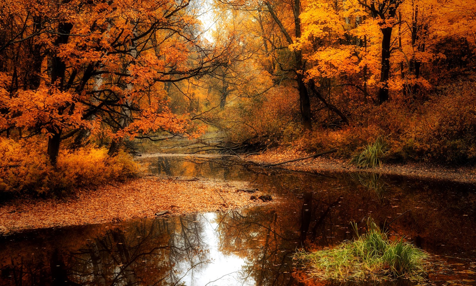 fall woods backgrounds wallpapers - photo #48