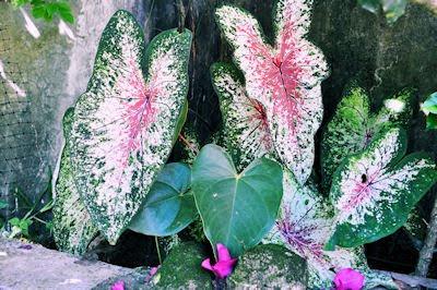 En algún lugar de mi jardín - My beautiful garden - Plantas de México en jardines