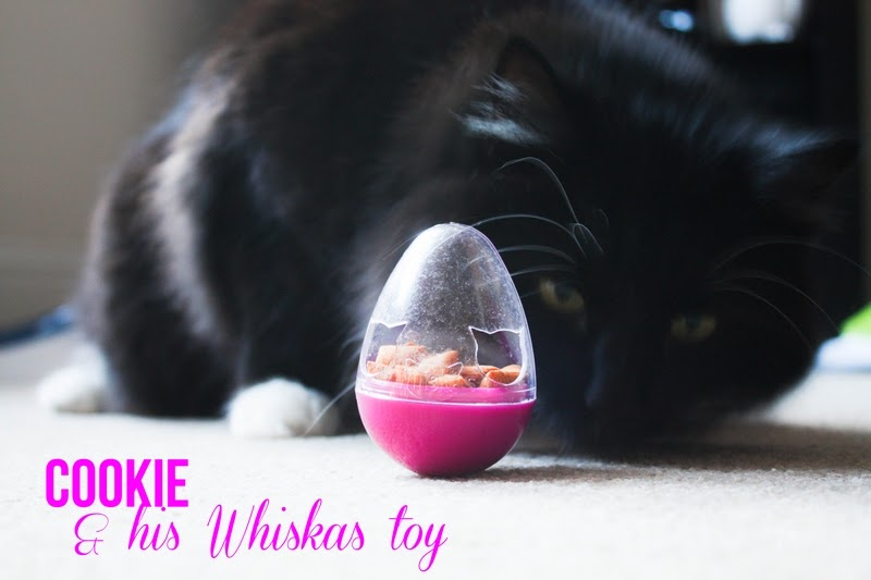 http://1.bp.blogspot.com/-B4-6gHDMtHs/UsA2AV7st4I/AAAAAAAAKTw/oauy1QNGs4E/s1600/cookie+and+his+whiskas+food+toy+ball+review+video+I.jpg