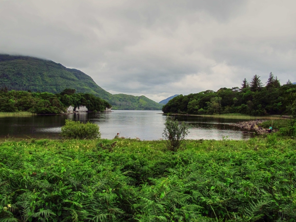View from Muckross House to the Killarney National Park, Ireland photo by susan wellington.