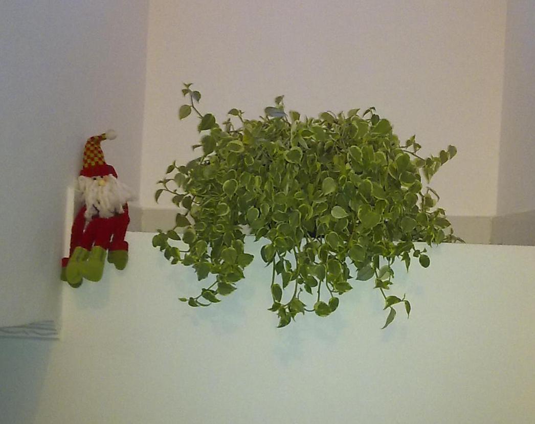 Dona ana costa as plantas e seus cuidados - Plantas de sombra exterior ...
