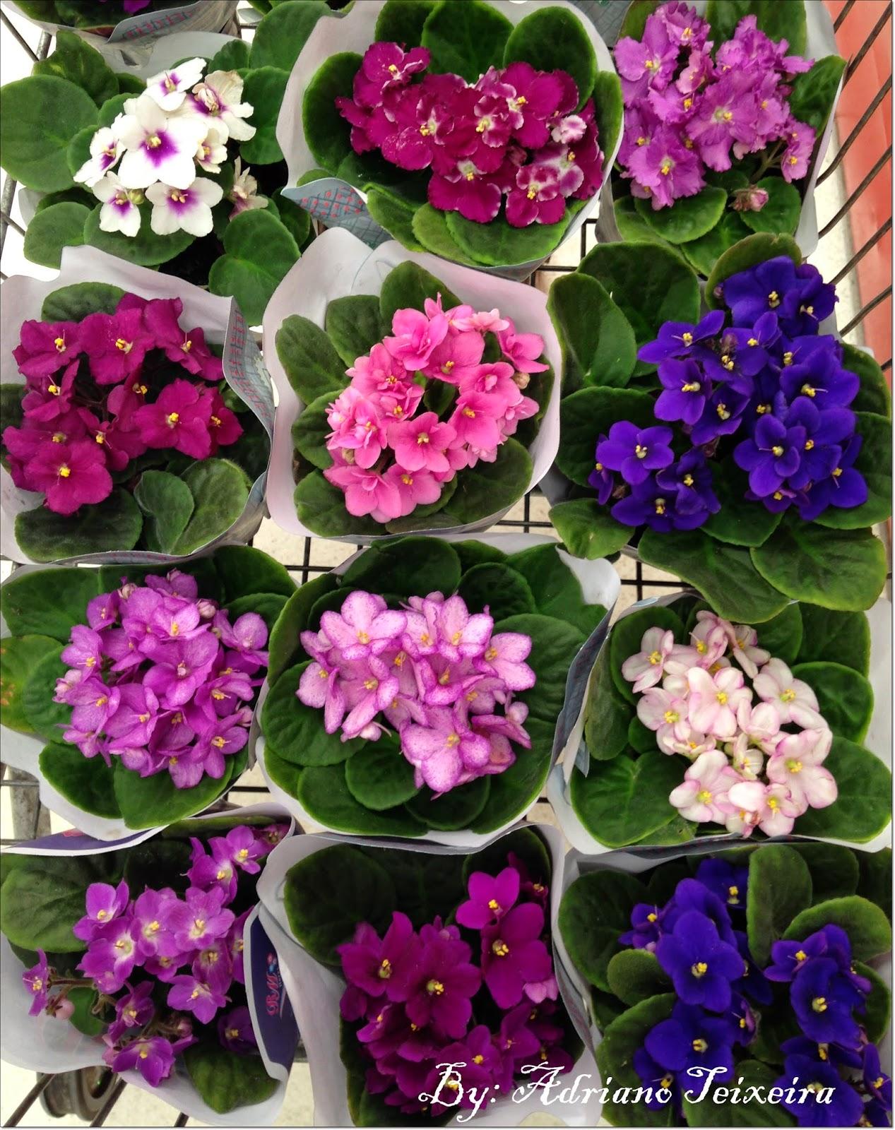 Galérias de imágenes de Flores Pedia Florespedia com