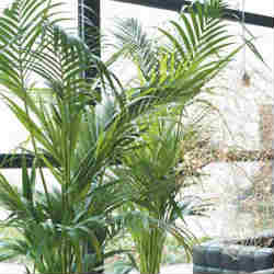 dica-fertilizante-adubo-natural-plantas-interior