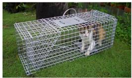 Bẫy bắt giữ mèo an toàn cho người dùng