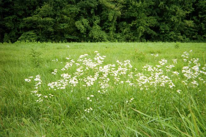 Wildflowers in grassy field