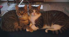 Luna e Giuliana - Le mie gattine