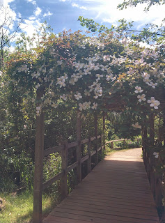 A Flowery Arch At Millennium Country Park in Marston Vale