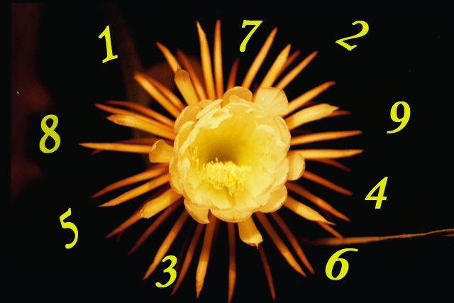 Numerology meaning of 1234 image 3