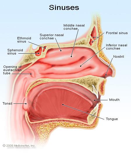 Swollen Turbinates Natural Treatment