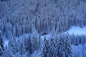 I Boschi d'Inverno
