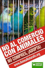 venta aves, venta de pájaros, venta animales... no compres, nacieron para volar