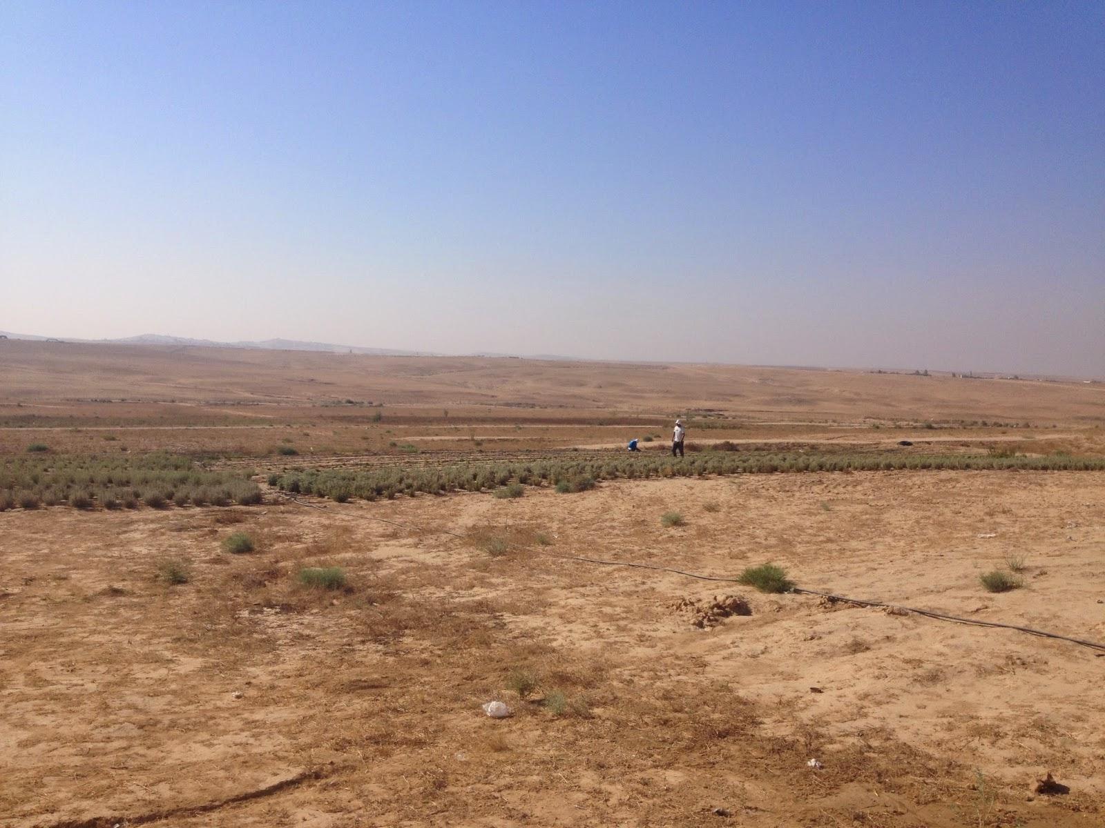 Wadi Attir