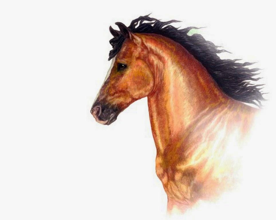 dibujos-en-acuarela-de-caballos