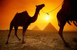 The CHANGE of  EGYPT 。。。《民主万岁:埃及大变天》