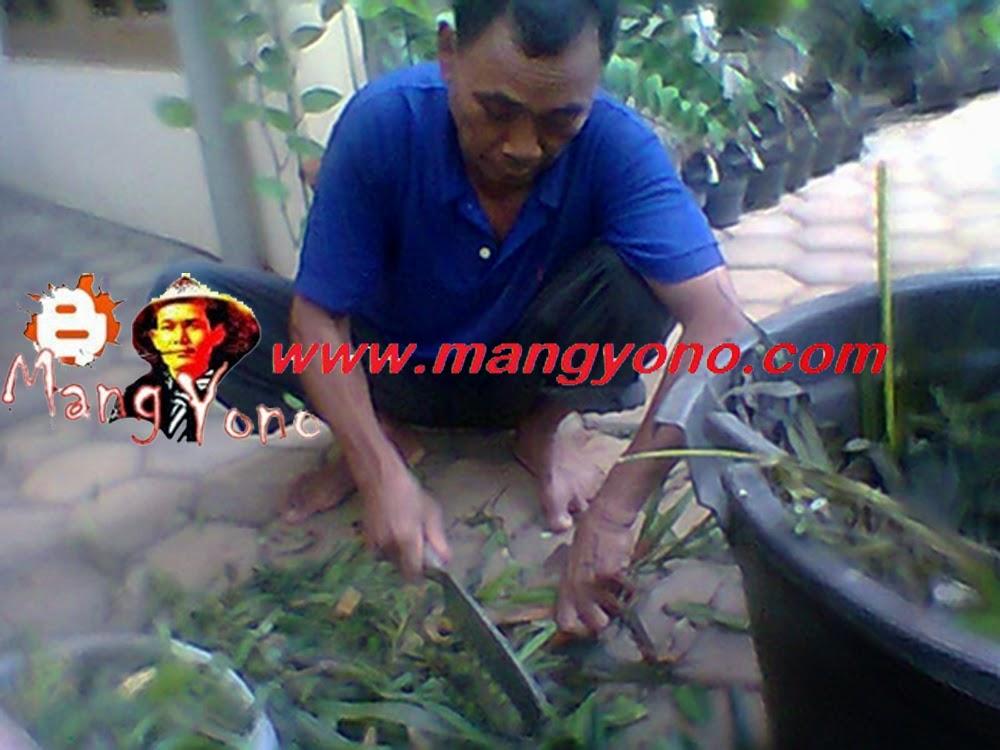 Mang Sukri melakukan pencacahan bahan organik