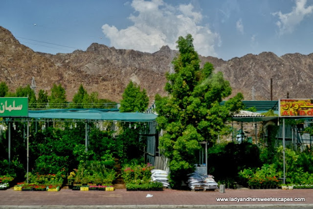 plant stalls at Fujairah
