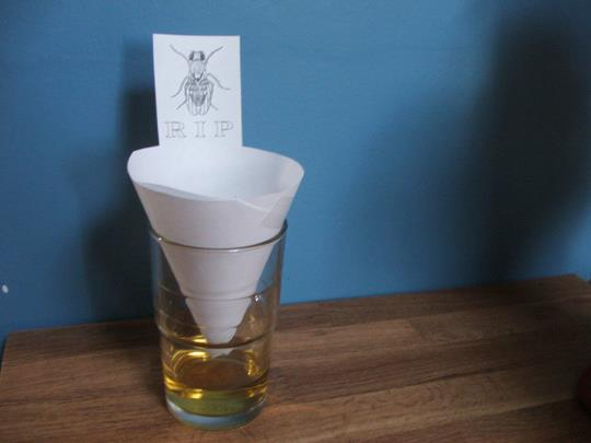 herbal health care fruit fly gnat death trap. Black Bedroom Furniture Sets. Home Design Ideas
