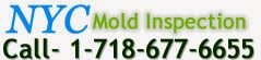 mold inspection services NYC