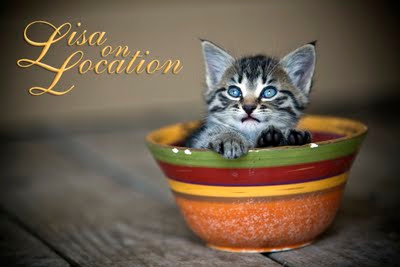New Braunfels photography kitten
