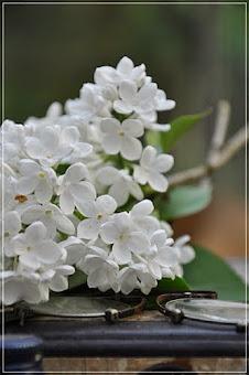Witte sering