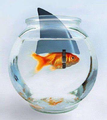 smiješne slike ribice