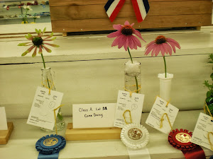 1st and 2nd Place Coneflowers
