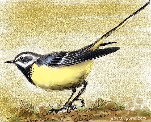 Forsärla sketch painting. Bird art drawing by illustrator Artmagenta.