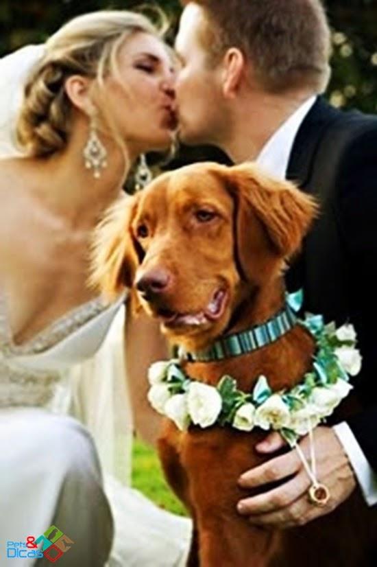 Cães em festa de casamento