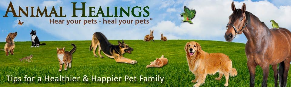 Pet Healing - Articles & Tips for a Happier, Healthier and Safer Pet Family
