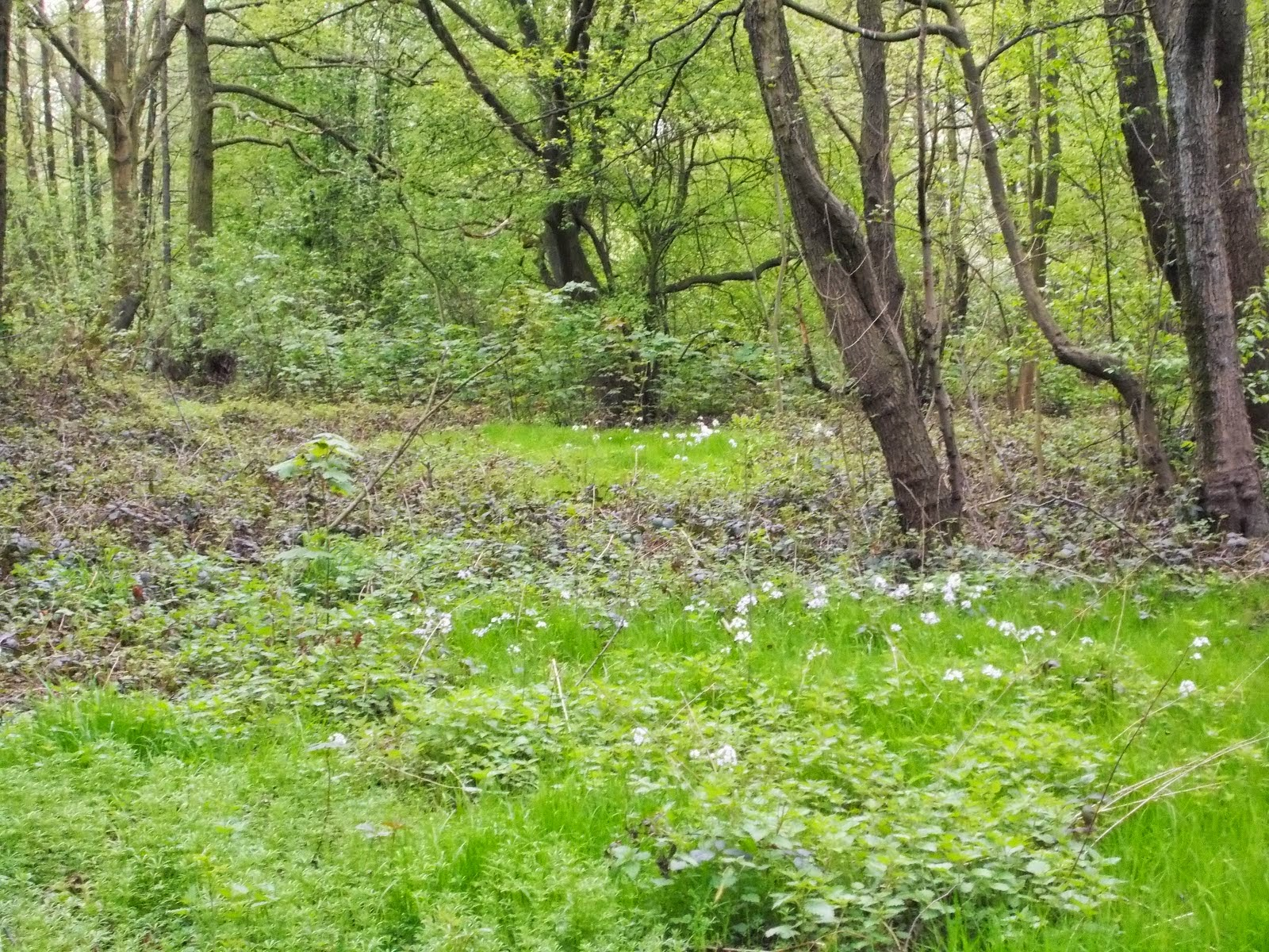 B das Barchembachtal das sich von Bedingrade über Gerschede bis nach Dellwig erstreckt mit und ohne Gewitter