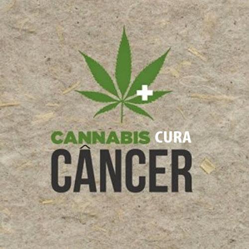 Como e por que a cannabis cura o câncer