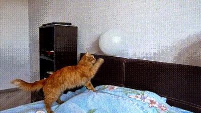 Cat vs Balloon Test