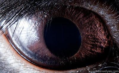 Animal eyes by Suren Manvelyan Seen On www.coolpicturegallery.us