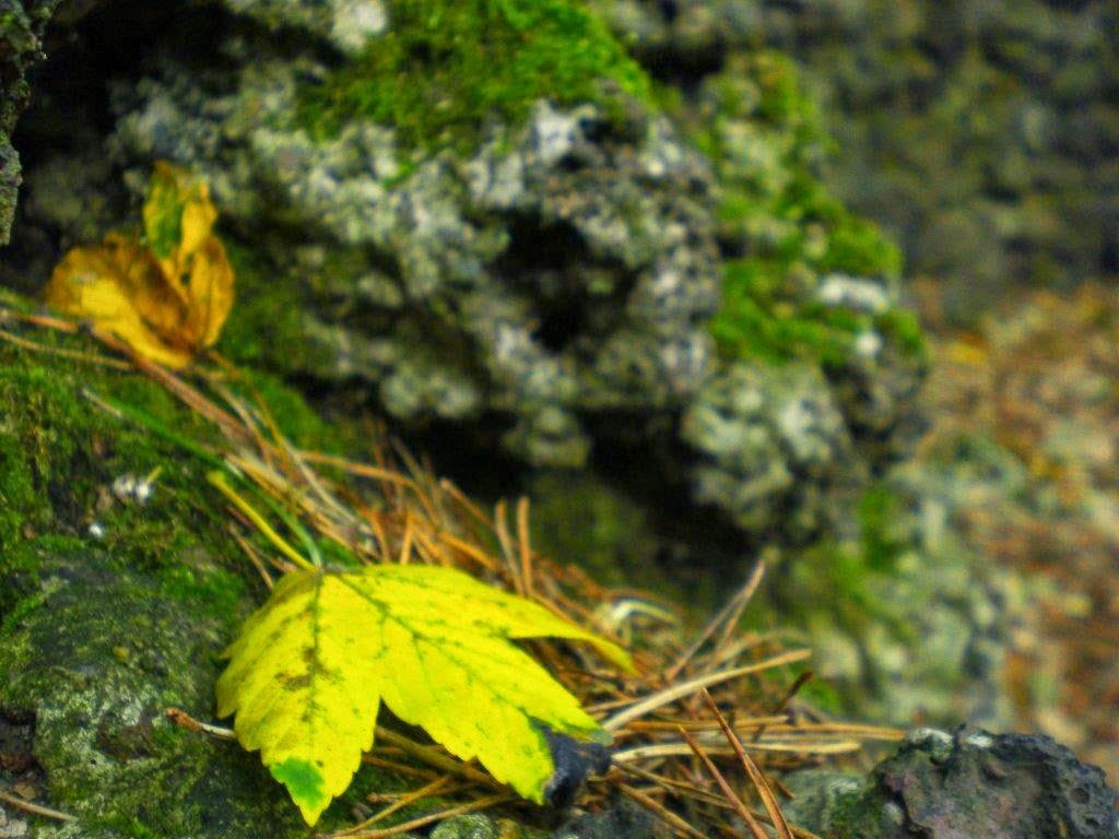 Stein Herbst Moos Blätter Wald Hunderunde