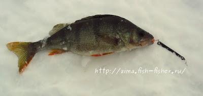 Зимняя рыбалка. Окунь на блесну