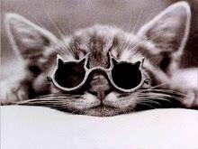 Gatos Hipster