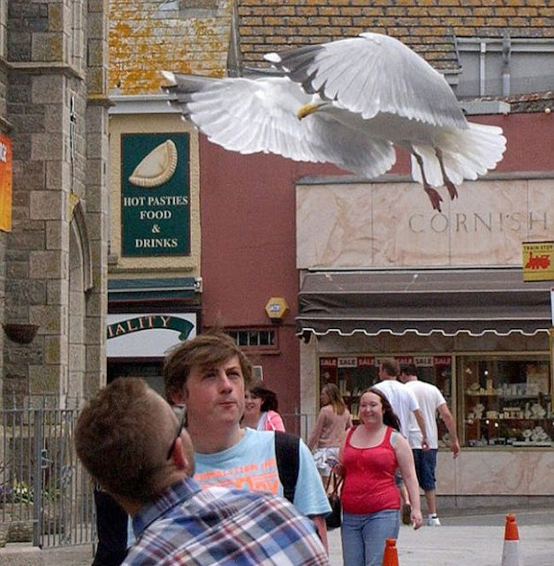 Seagull ice cream thief (10 pics), seagull steals ice cream, funny seagull, seagull pictures
