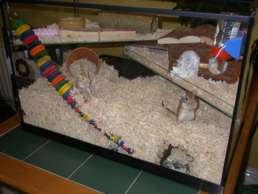 What Can You Put In A Hamster Cage For Bedding