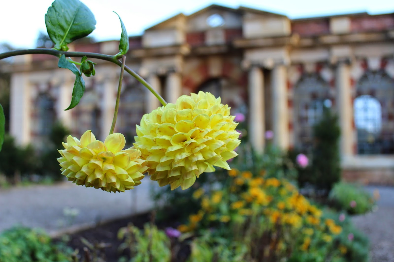 Tyntesfield {National Trust} #hdygg // 76sunflowers