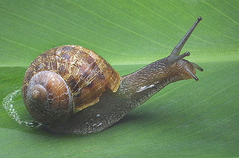 Gastropoda Animal List