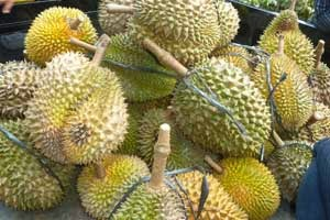 Durian dengan Produk Organik NASA