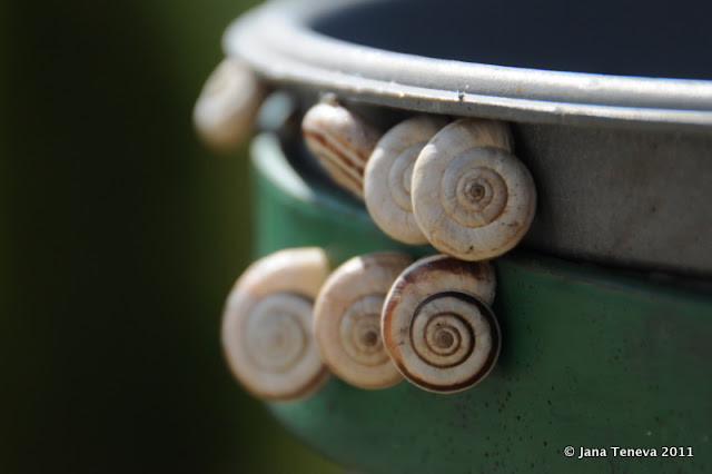 snails Bulgaria