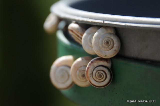 snails Bulgaria