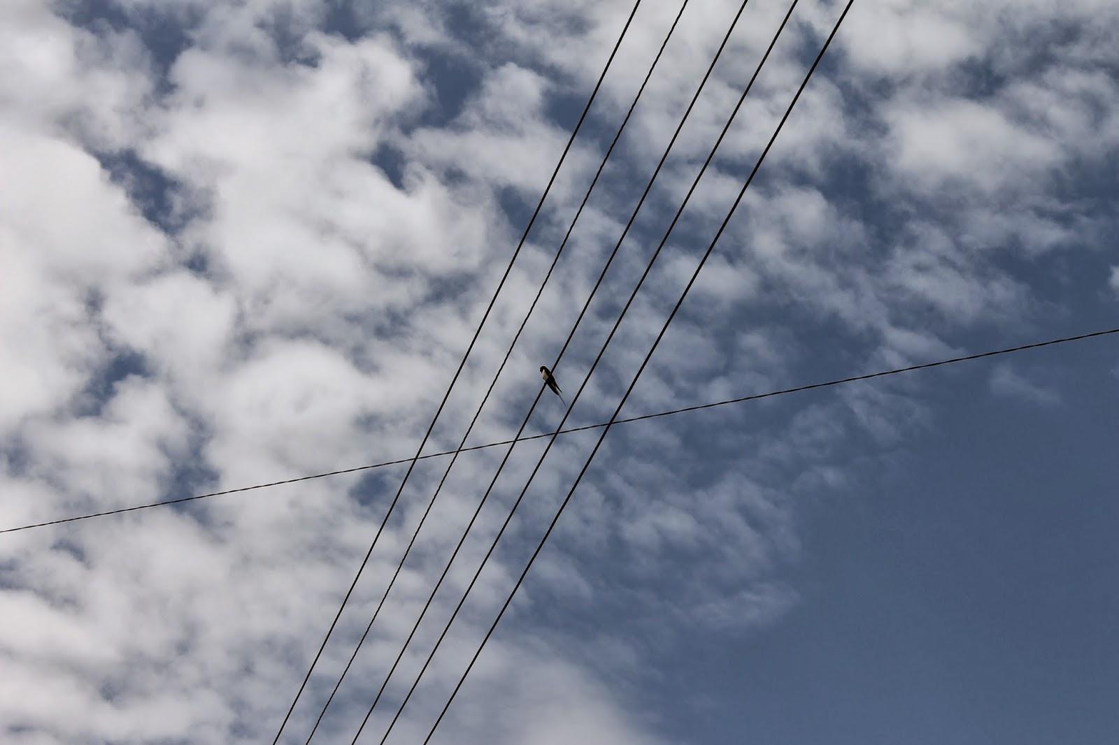 фото Ласточка на проводах